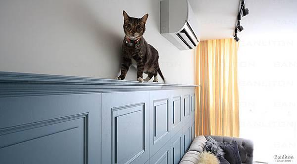 挑高夾層裝潢設計-不關籠毛小孩的自在寵物宅00.jpg
