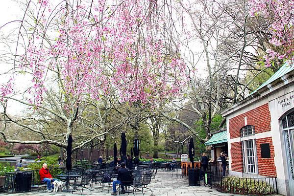 180429 nyc central park (102).jpg