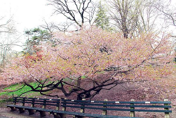 180429 nyc central park (160).jpg