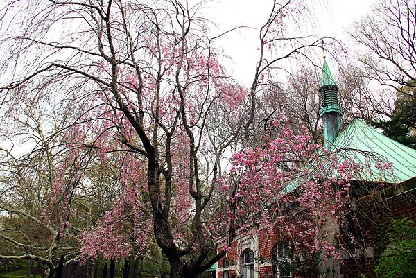 180429 nyc central park (105).jpg