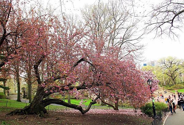 180429 nyc central park (268).jpg