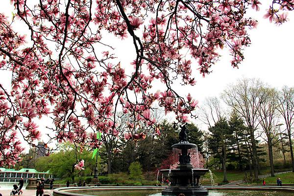180429 nyc central park (317).jpg