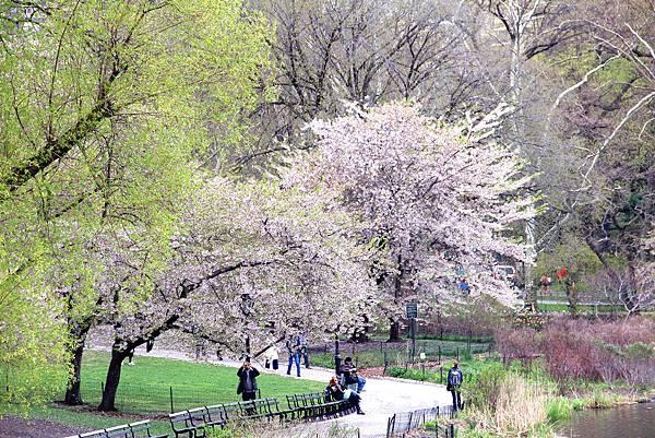 180429 nyc central park (377).jpg