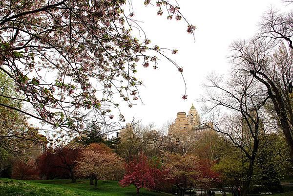 180429 nyc central park (405).jpg