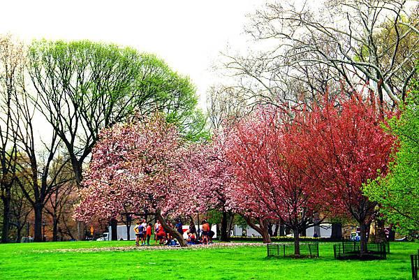 180429 nyc central park (460).jpg