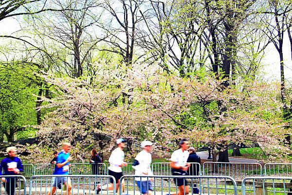 180429 nyc central park (470).jpg