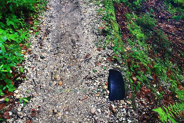 180818 trail view (35).JPG