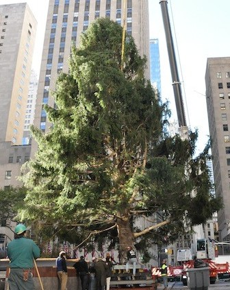 story_xlimage_2010_11_R4122_Rockefeller_Christmas_Tree_111210.jpg