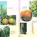阿寶簡體書店『園藝栽培』…柑橘病蟲害防治手冊(第2次修訂版)-內頁