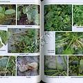 阿寶簡體書店『園藝栽培』…蔬菜病蟲害防治原色生態圖313譜-內頁