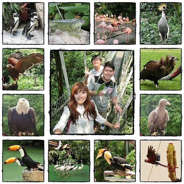 鳥禽公園.jpg