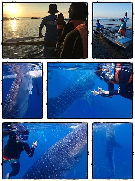鯨鯊.jpg