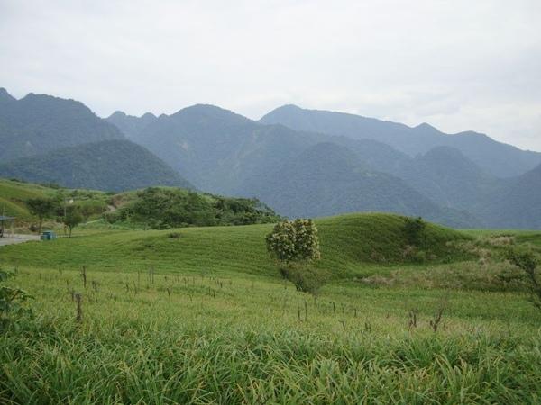 六十石山-滿山石山-早熟金針花遍野金針草
