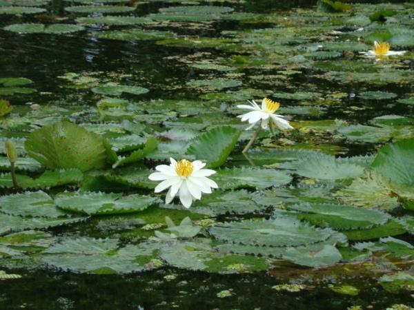 水生植物區