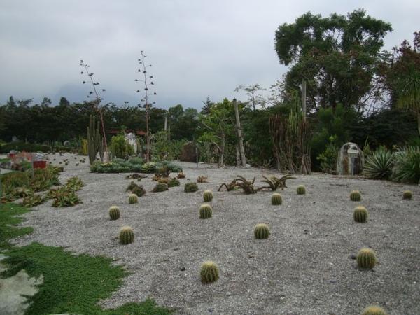 沙漠植物區