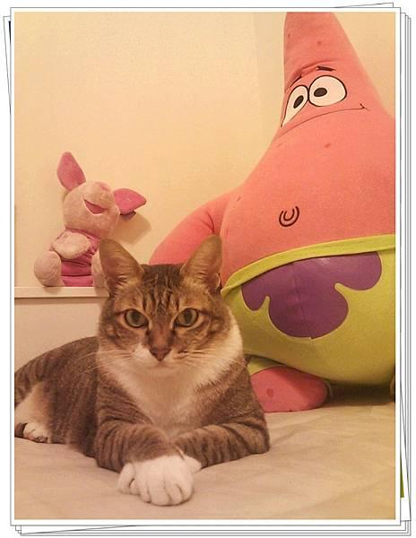 我的貓與派大星