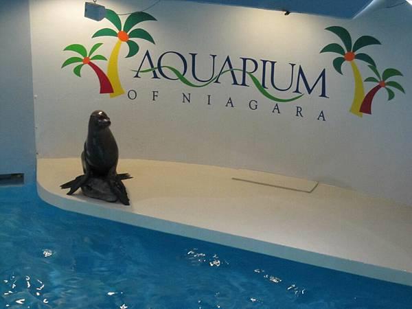 野柳的海豚海獅表演精采100倍吧