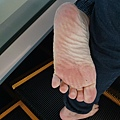 雙腳萬能 因為物競天擇適者生存