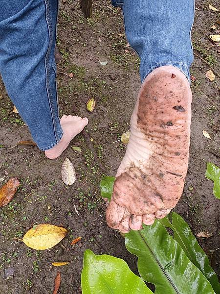 赤腳踩泥巴 訓練平衡抗衰老