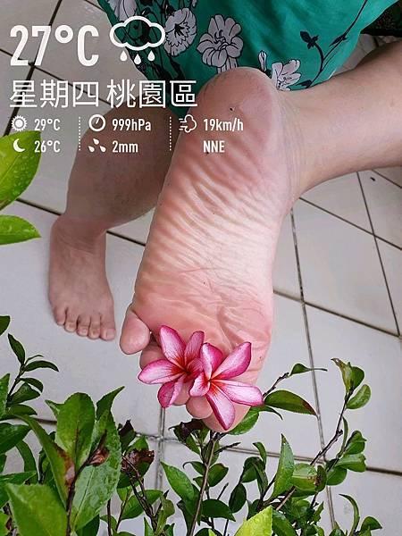 照片中的花是紅花緬梔 2021.07.22 