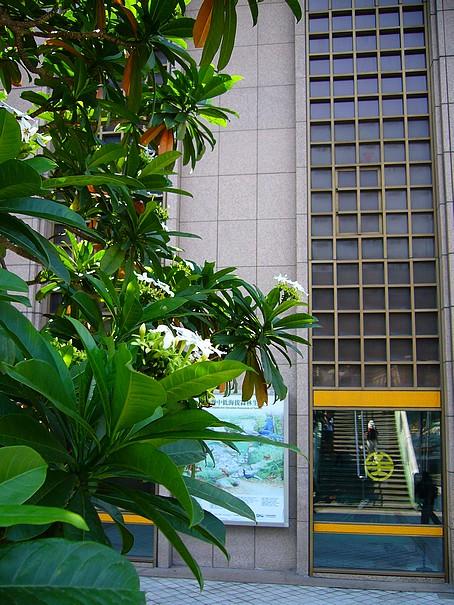 台北車站海檬果