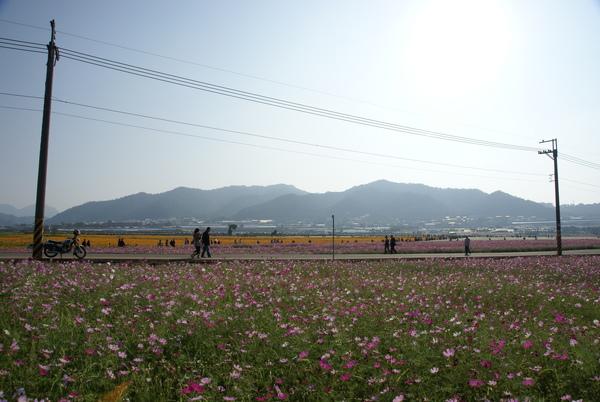 新社花海節-003.JPG