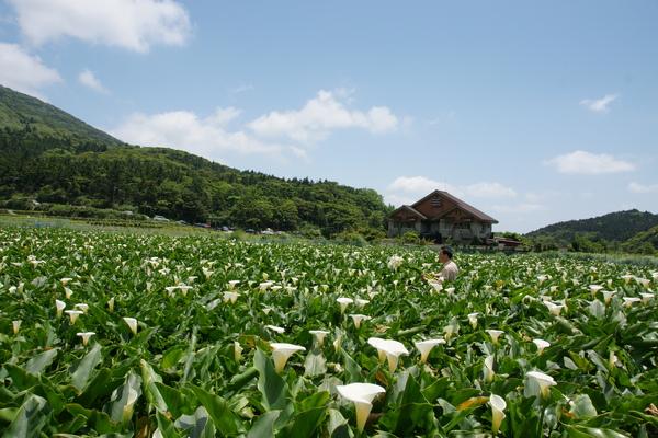 財福海芋園