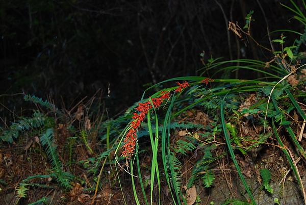 20101229-30_台中八仙山-小毛-144_調整大小.jpg
