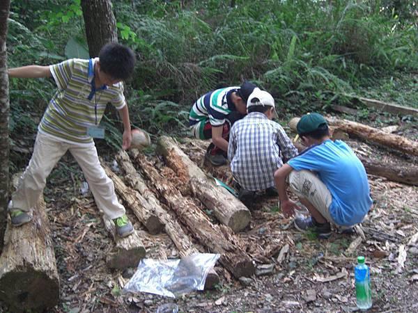 20110705-07_fun野叢林-21.JPG