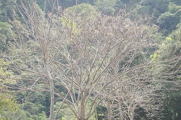 圖2.寒風吹拂,利用落葉來降低能量損耗來避冬
