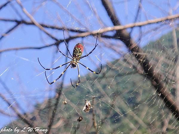 蜘蛛的秘密