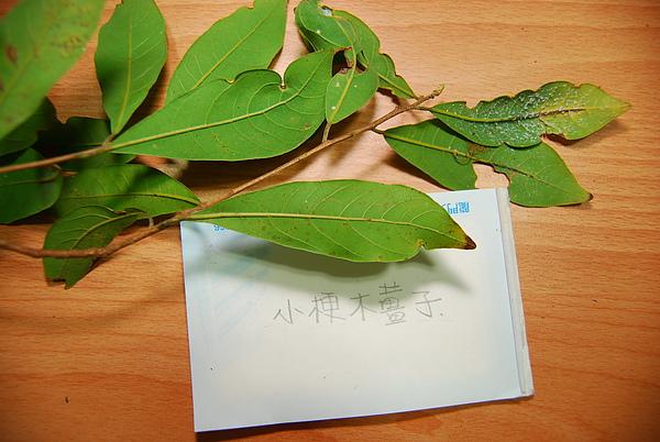 20101229-30_台中八仙山-小毛-53_調整大小.jpg