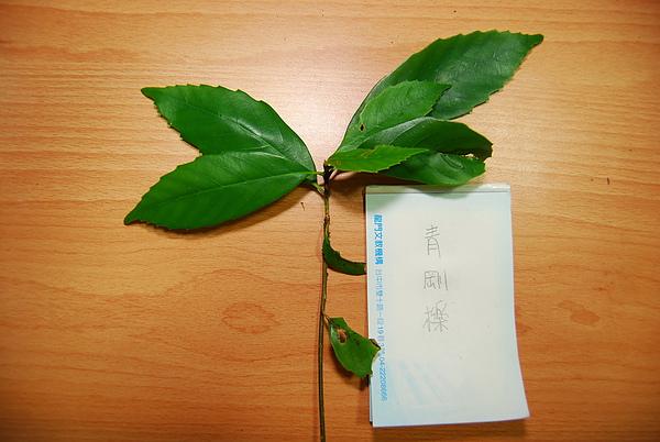20101229-30_台中八仙山-小毛-72_調整大小.jpg