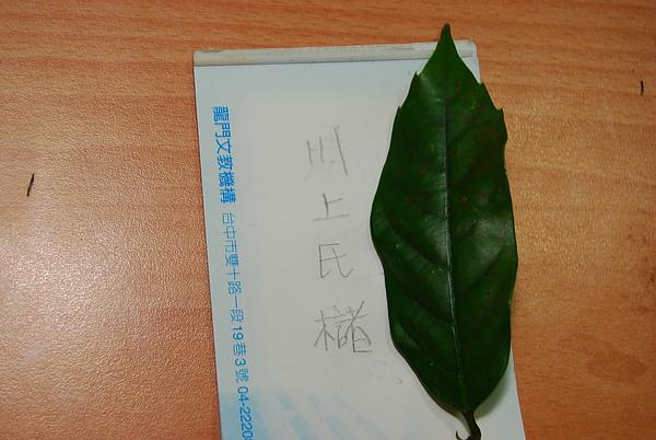 20101229-30_台中八仙山-小毛-69_調整大小.jpg