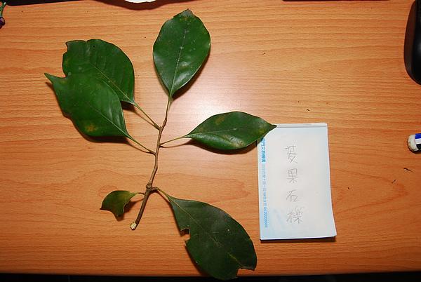 20101229-30_台中八仙山-小毛-79_調整大小.jpg