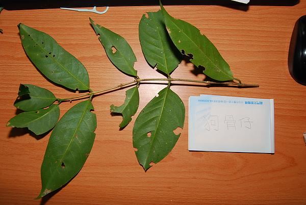 20101229-30_台中八仙山-小毛-29_調整大小.jpg