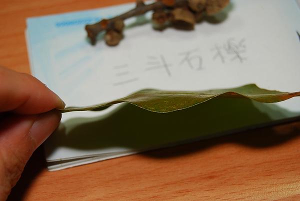 20101229-30_台中八仙山-小毛-62_調整大小.jpg