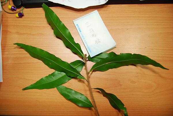 20101229-30_台中八仙山-小毛-75_調整大小.jpg