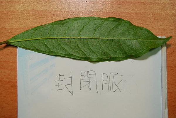 20101229-30_台中八仙山-小毛-59_調整大小.jpg