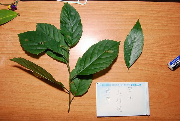 20101229-30_台中八仙山-小毛-32_調整大小.jpg