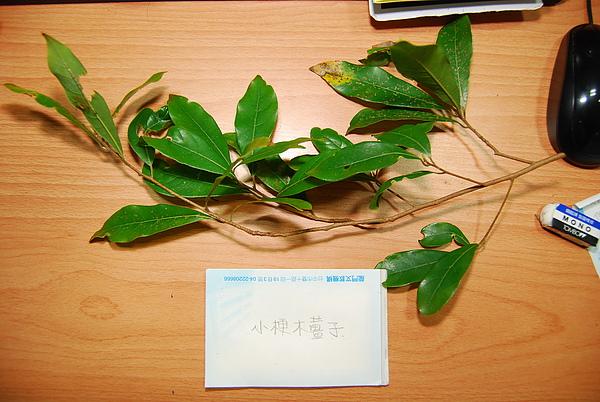 20101229-30_台中八仙山-小毛-51_調整大小.jpg