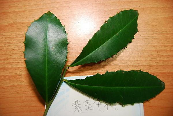 20101229-30_台中八仙山-小毛-50_調整大小.jpg