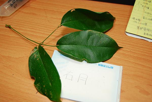 20101229-30_台中八仙山-小毛-55_調整大小.jpg