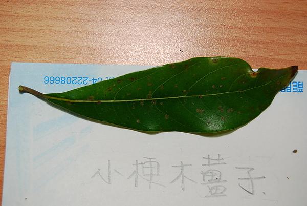 20101229-30_台中八仙山-小毛-54_調整大小.jpg