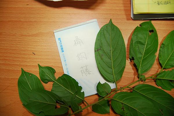 20101229-30_台中八仙山-小毛-68_調整大小.jpg