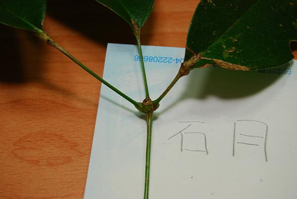20101229-30_台中八仙山-小毛-57_調整大小.jpg