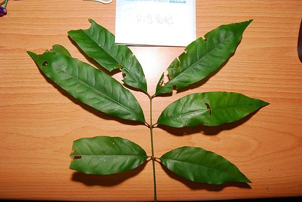 20101229-30_台中八仙山-小毛-35_調整大小.jpg