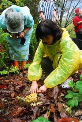 20101114_台中八仙山_小毛-49.jpg
