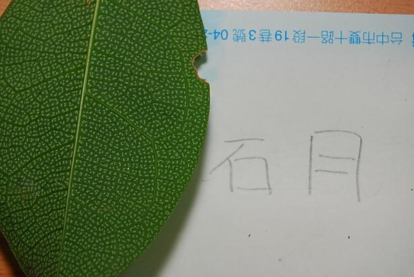 20101229-30_台中八仙山-小毛-56_調整大小.jpg
