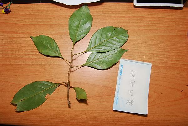 20101229-30_台中八仙山-小毛-80_調整大小.jpg
